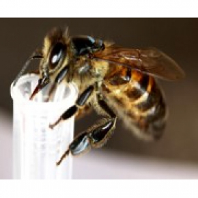 Bees and absolute numbers