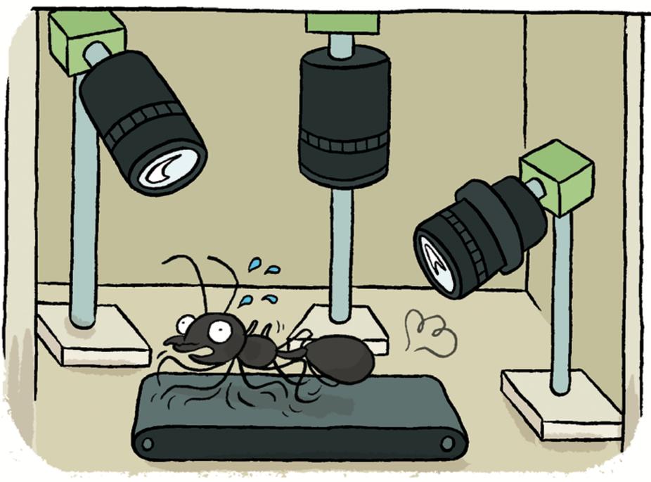 """The comics """"Sciences en bulle"""""""